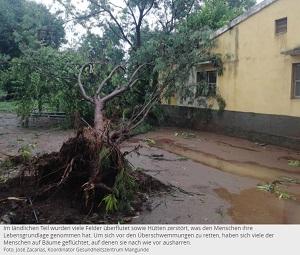 Umgestürzter Baum auf schlammigem Hof.